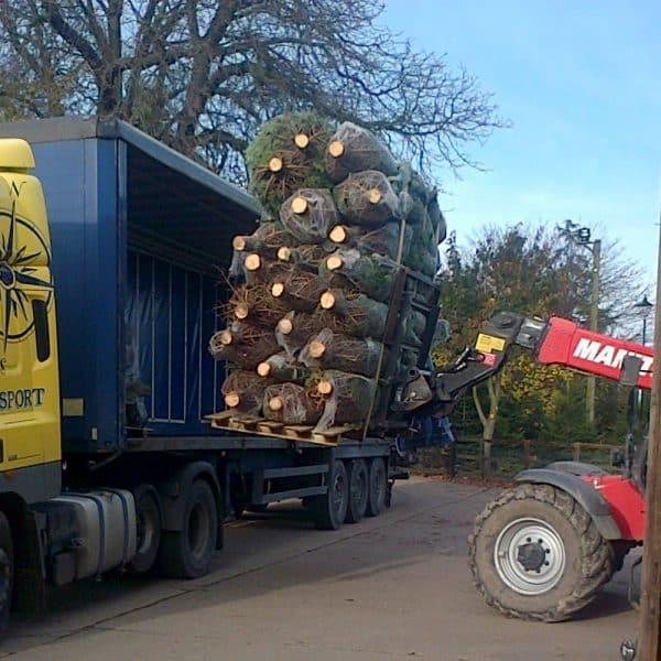 wholesale Real Christmas trees